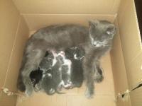 Подарявам 6 малки бебета