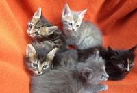 5 малки сладки котета без имена!