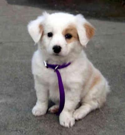 търся малка порода куче