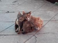 Четири малки сладурчета