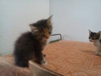 Десет игриви котета