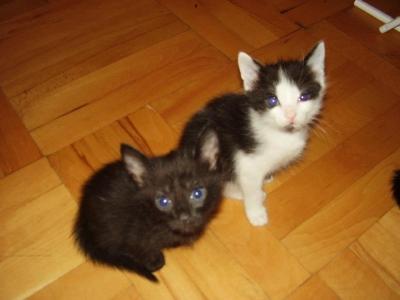Малки домашни котета
