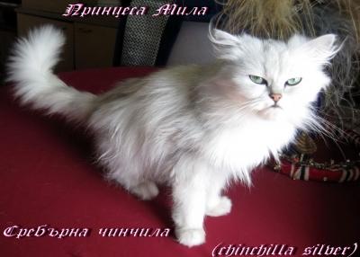 Принцеса Мила