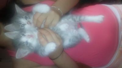 Котенце