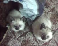 Лъки и Софи