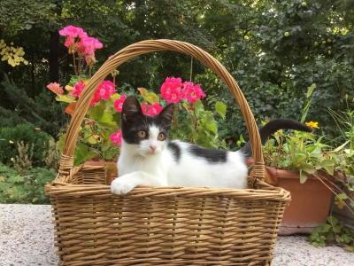 Котенцето Панда