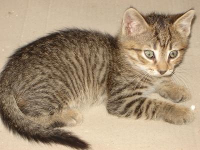 Подарявам малки котета родени на 26,07,2016