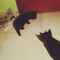 Подарявам две малки черни котенца