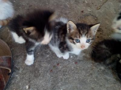 Малки пухкави котета