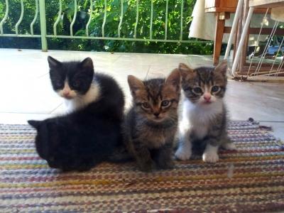 Пухкави двумесечни котенца си търсят дом