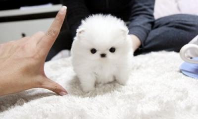 Породански кученца
