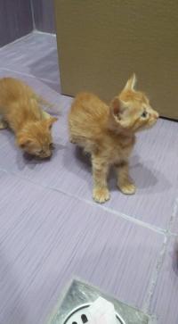 Подарявам 4 котки
