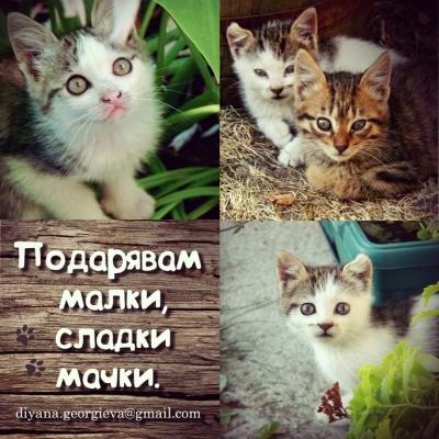 Подарявам малки, сладки мачки!