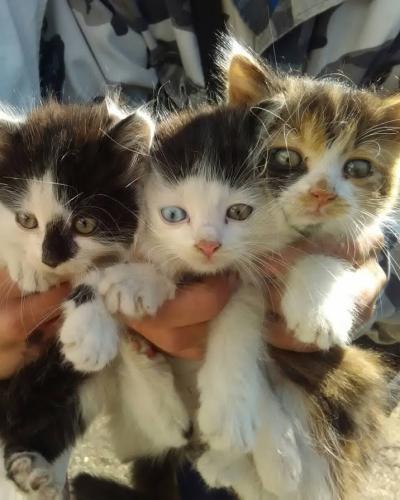 Подаряваме 3 котенца