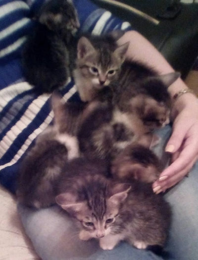 Подаряват се котенца