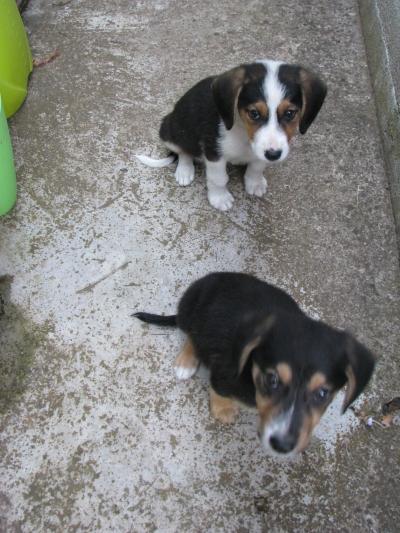 Лъки и Бобо